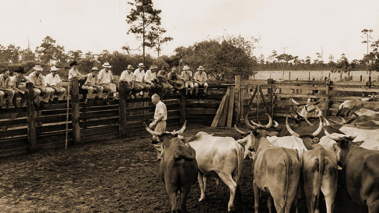 cattle-pen.jpg