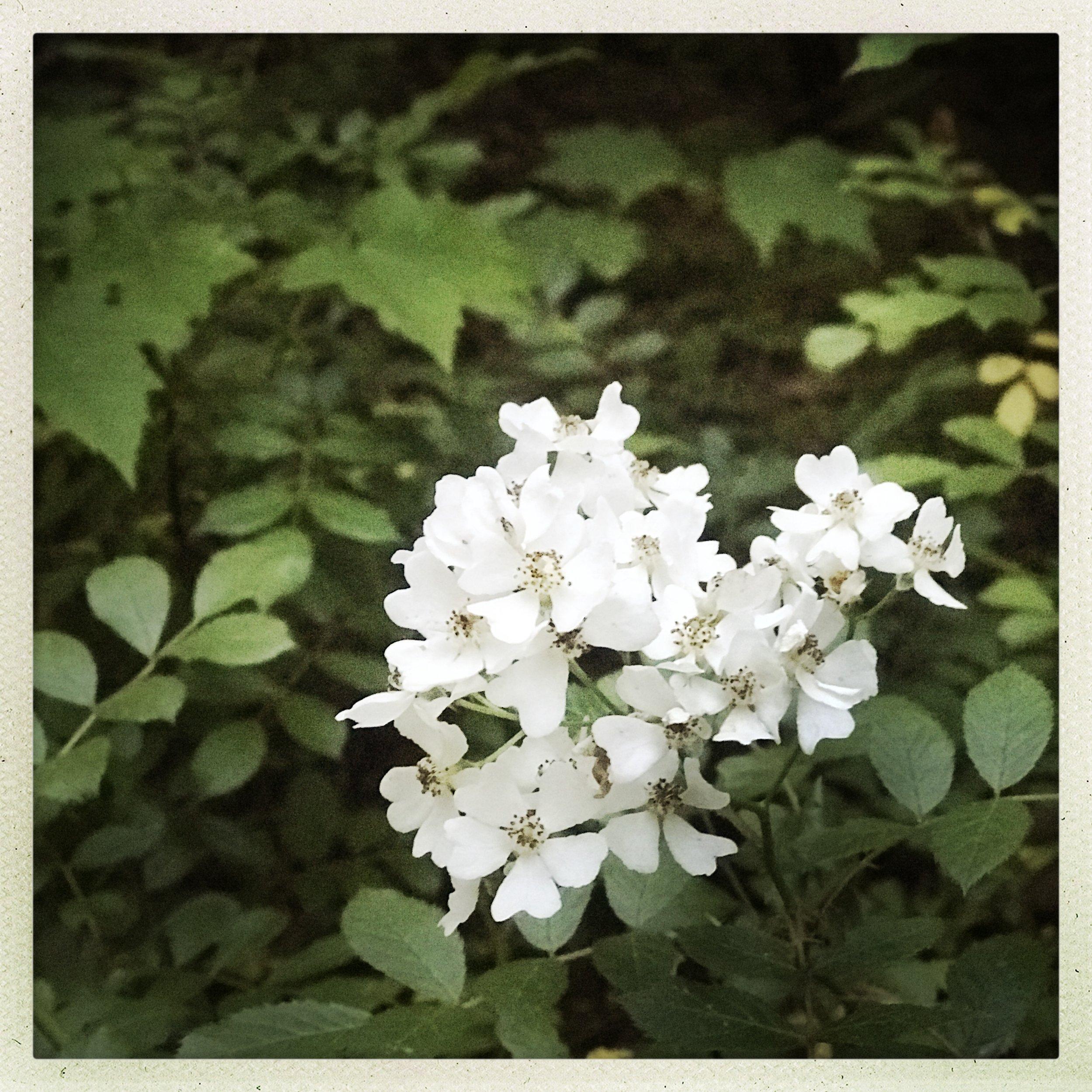 2 Ashville Spring Bloom.jpg