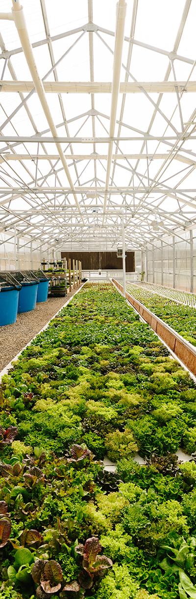 Rooted Gypsy Farm aquaponics