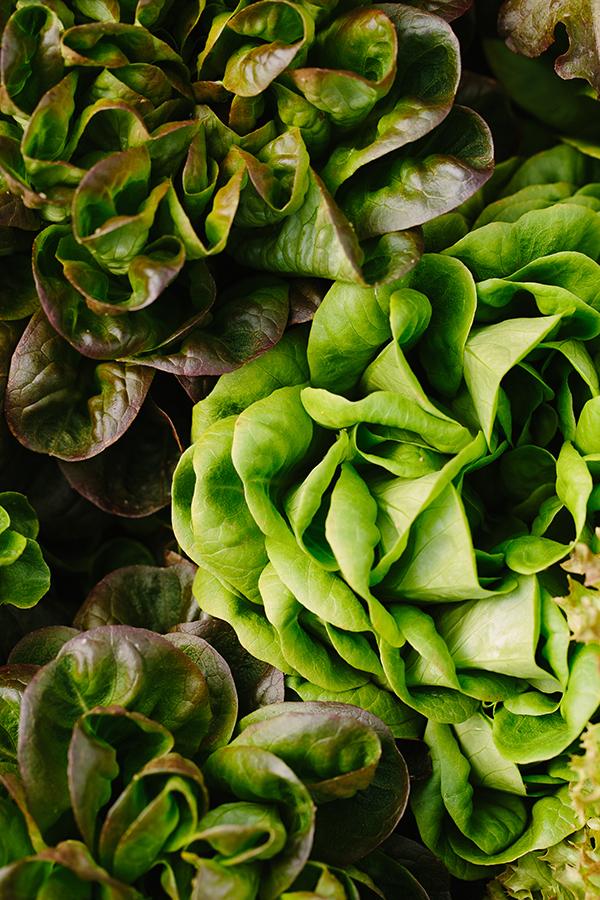 Rooted Gypsy Farm aquaponic year-round lettuce