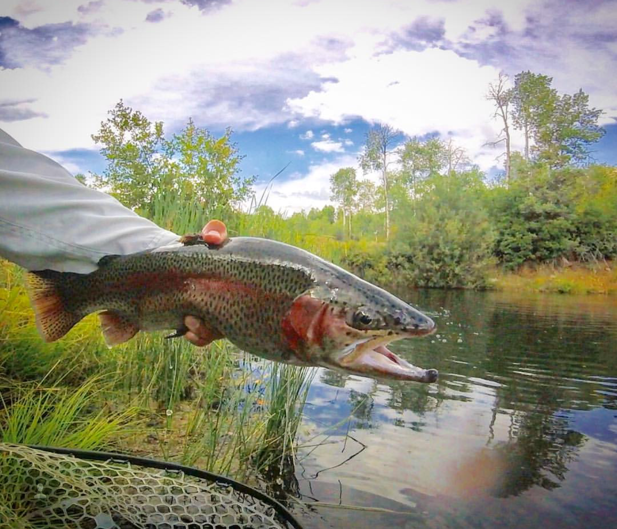 Colorado West Slope Fly Fishing