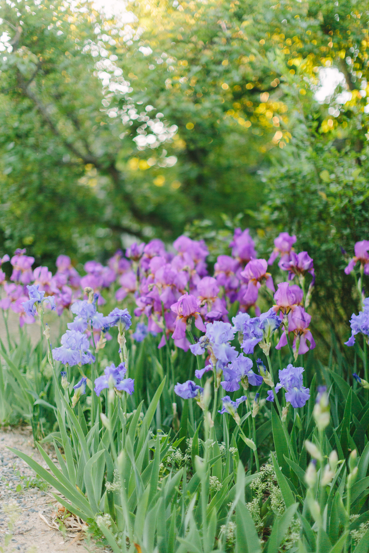 Grand Valley Iris_Cat Mayer