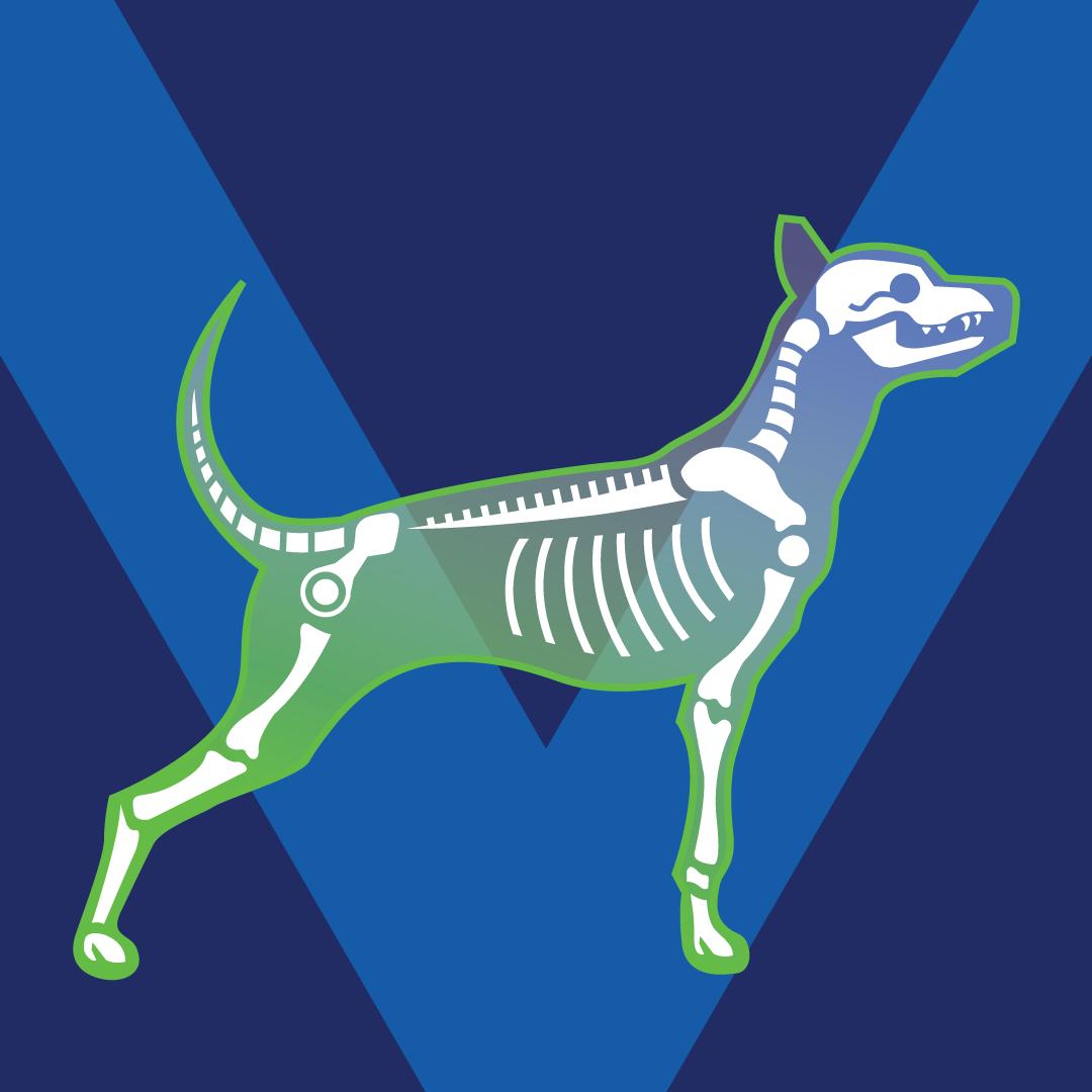 Dog Skeleton -