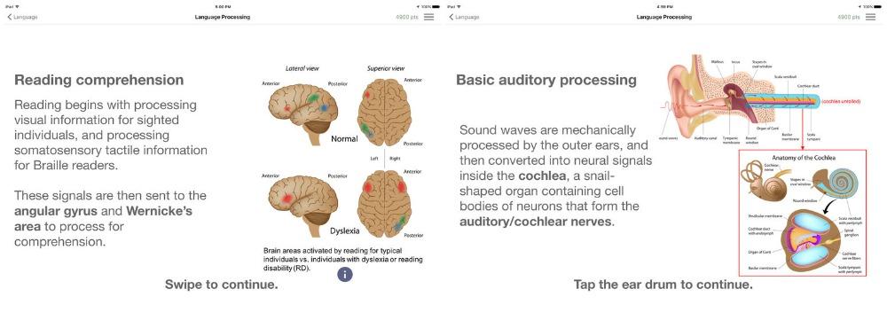 NeuroCircuits.jpg