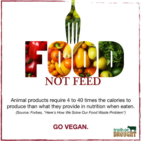 Food-not-feed.jpg