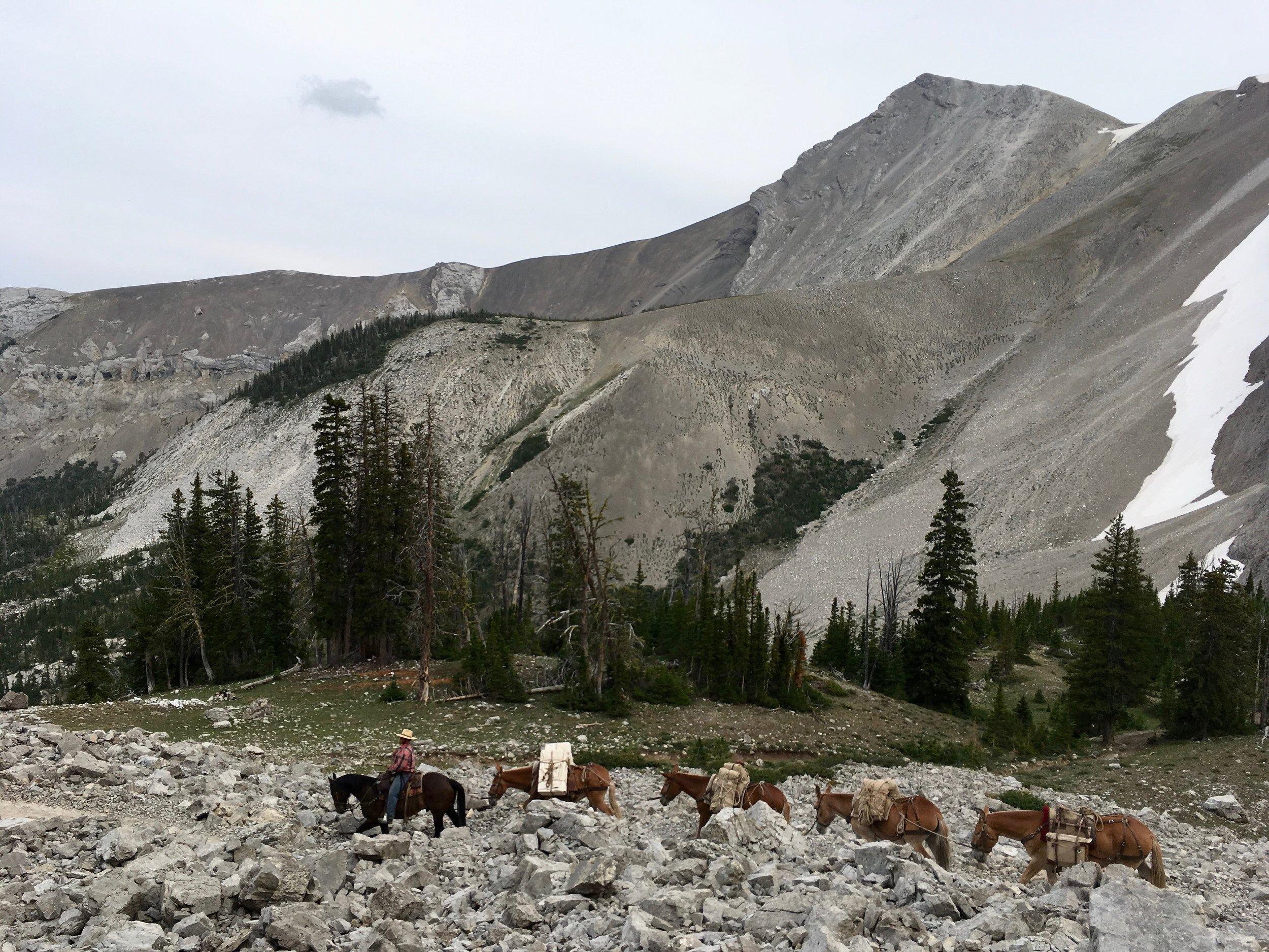 Mule string in the Bob Marshall Wilderness