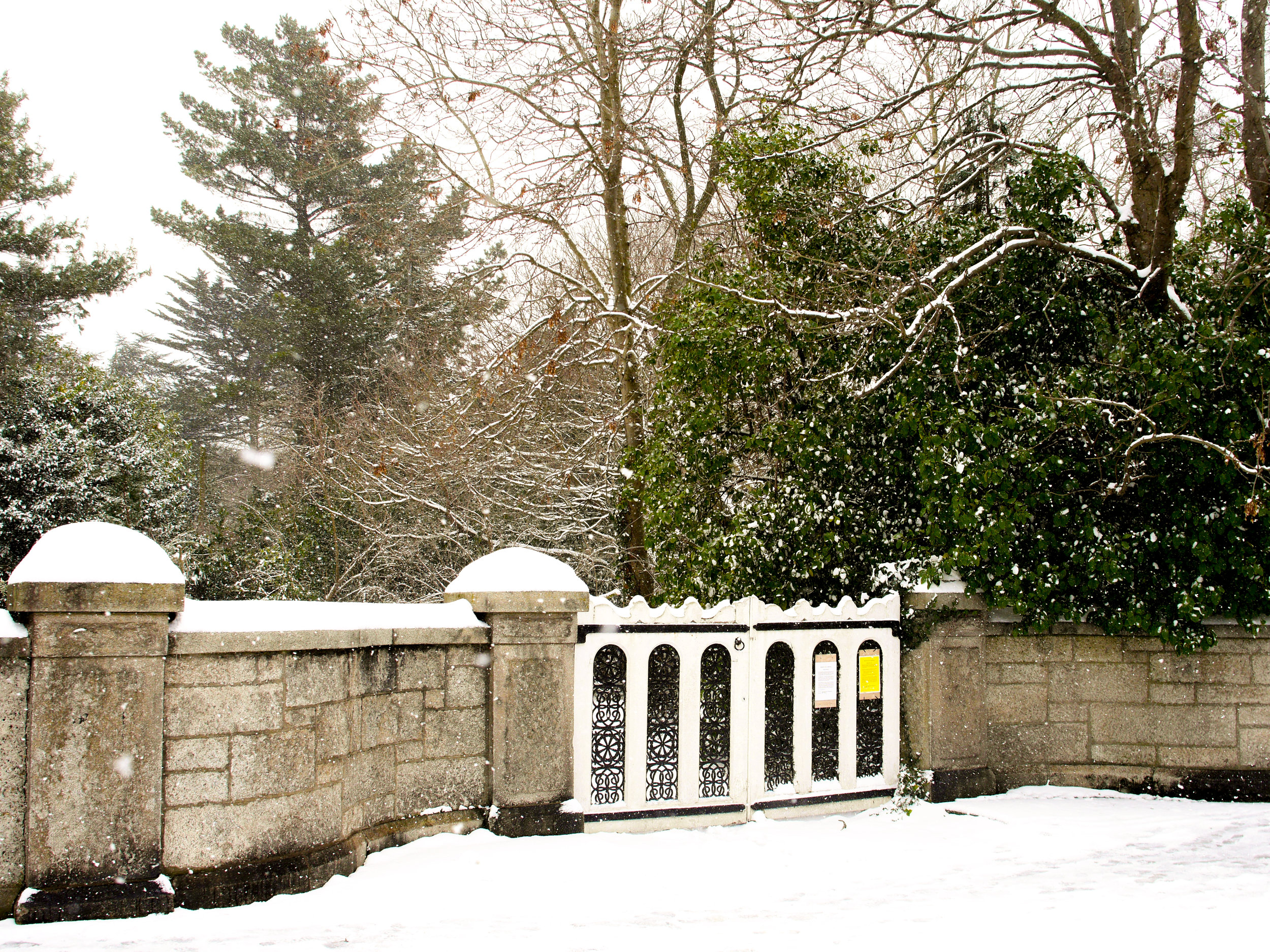 snow covered gate in Dublin, Ireland