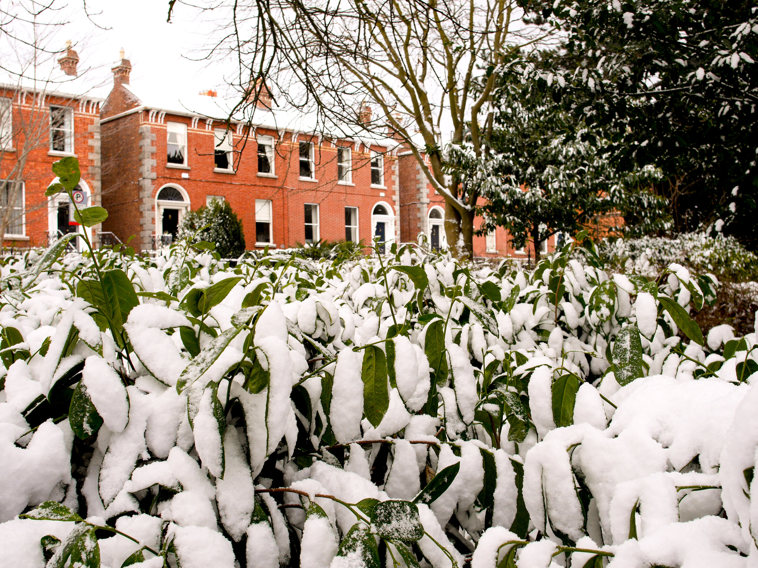snow covered plants in Dublin, Ireland