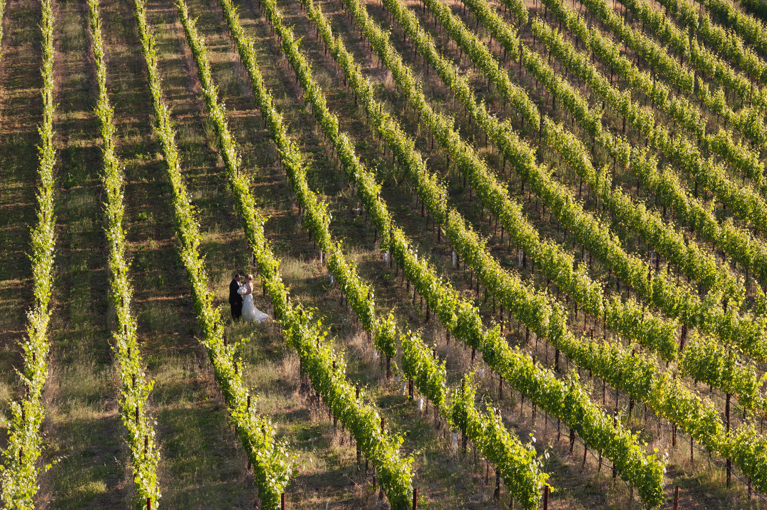 For Wine Madness: Marry in a Winery! -