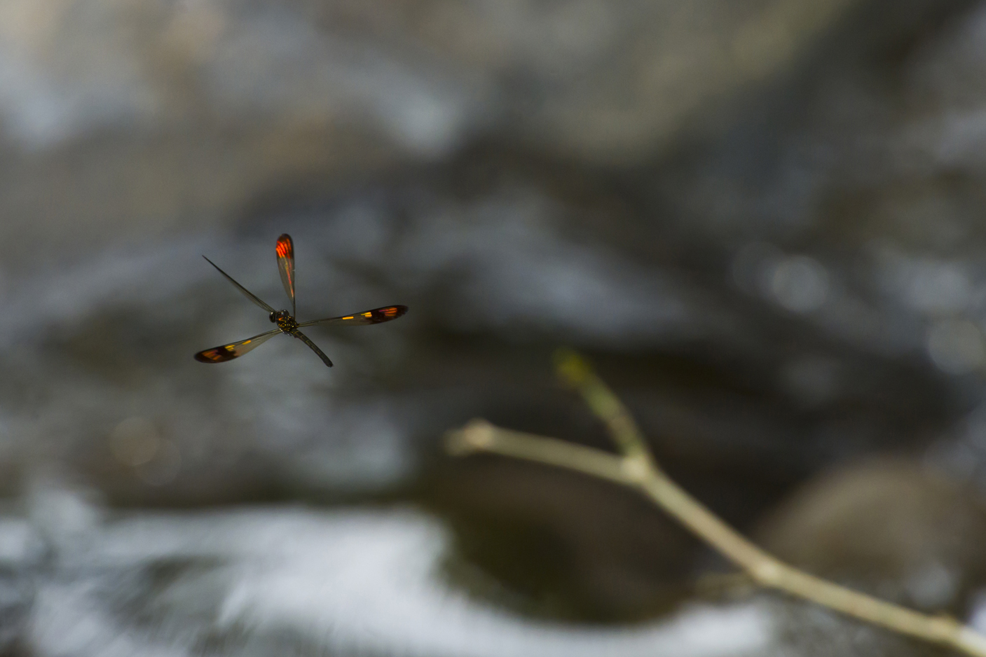 Damsel Fly.jpg