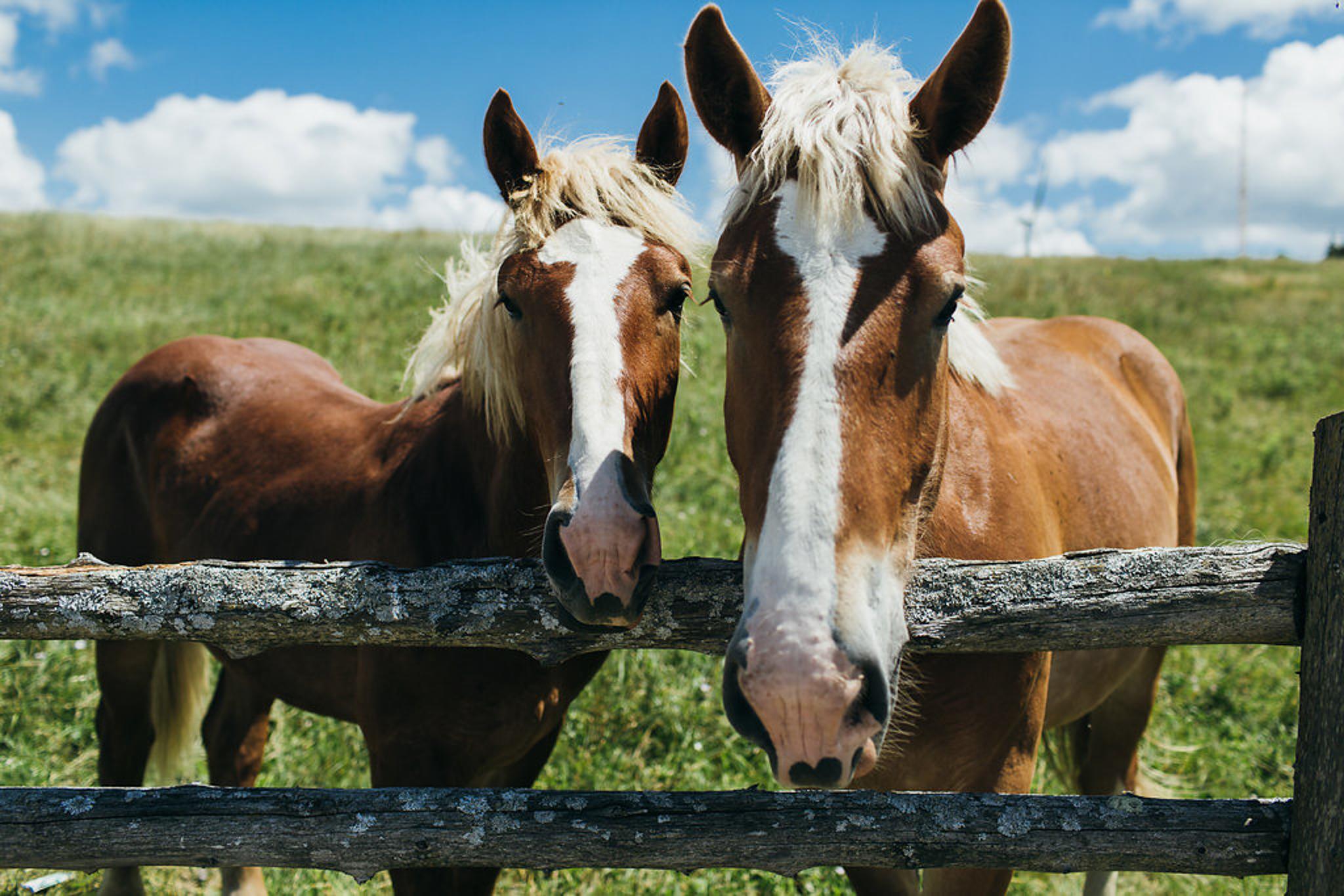 Iron Horse Ranch Wedding (7 of 122).jpg