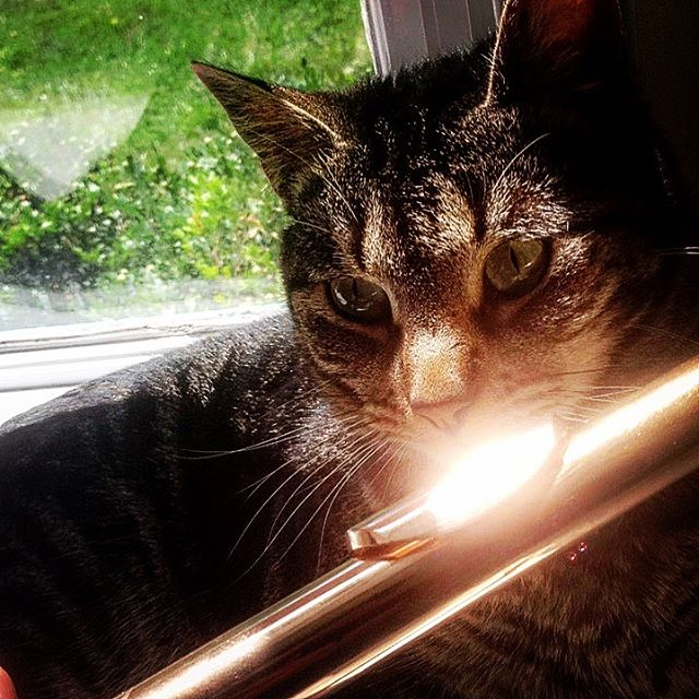 Susan has the #purrfect embouchure. 😻🎶🙀