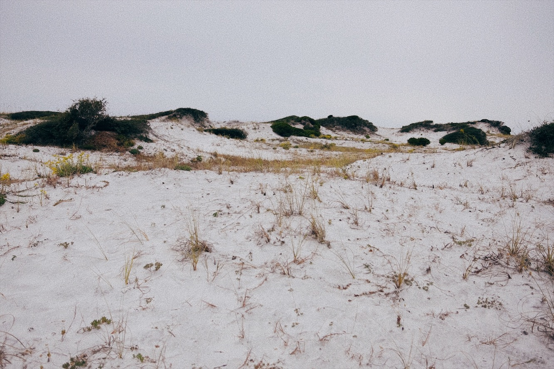 Sand Dunes  at Grayton Beach State Park, FL