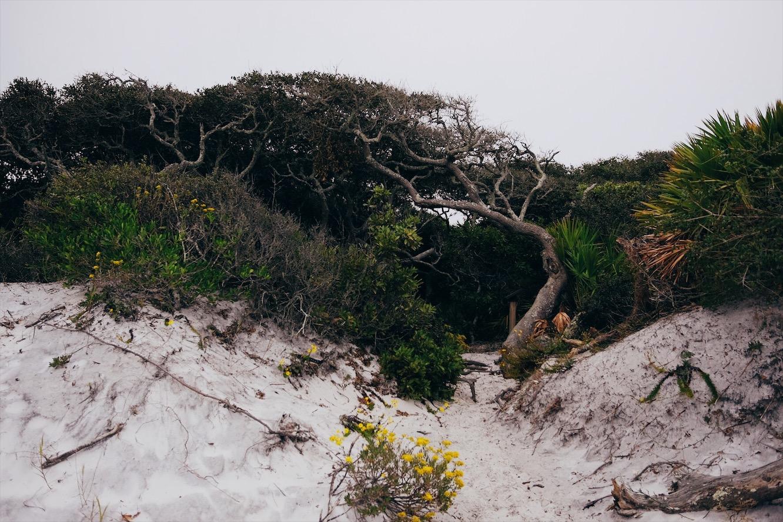 Lush forest fo und at Grayton Beach State Park, FL