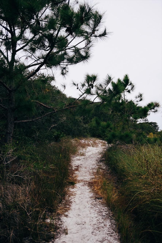 Hiking Trail  at Grayton Beach State Park, FL