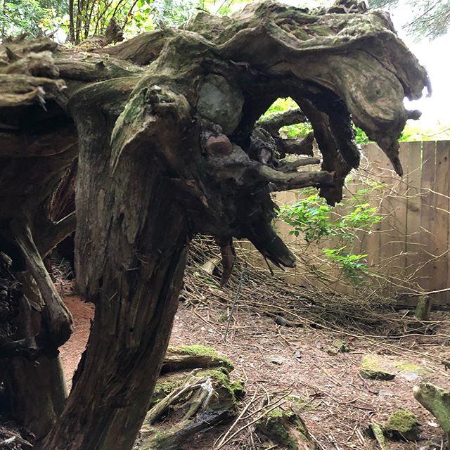 #gargoyle tree