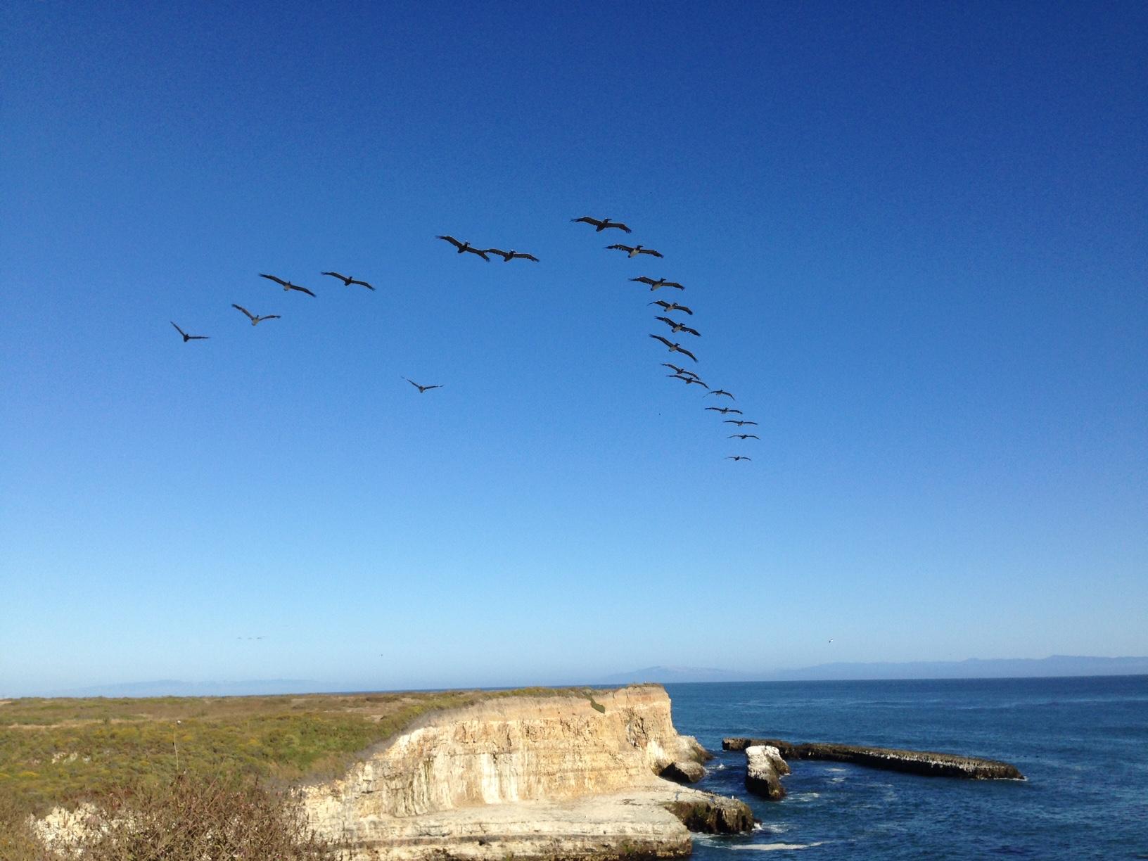 Pelicans Flying Over Ocean Cliffs