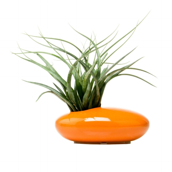 {The oblong shape and off-centered opening gives this unique planter a modern touch, a great piece for your patio dining table. From:  Dot & Bo .}