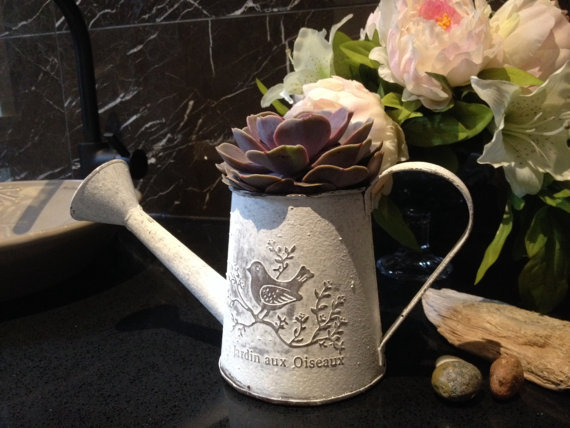 {Watering cans are a novelty item in shabby chic in outdoor accessorizing. This tabletop planter is a great way to display your fresh-cut or even dried flowers. From:  Plants In Mind .}