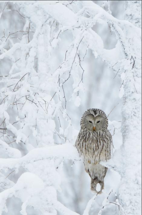 Fotofinlandian voittanut valokuva: Satumetsän viisas, Markus Varesvuo