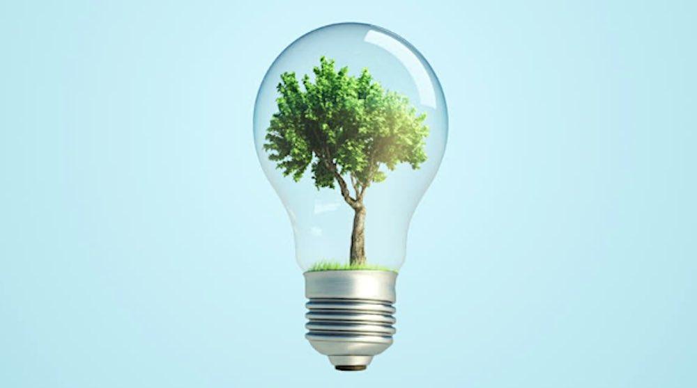 bulb plant.jpg