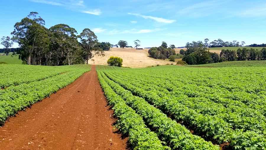 agri australia.jpg