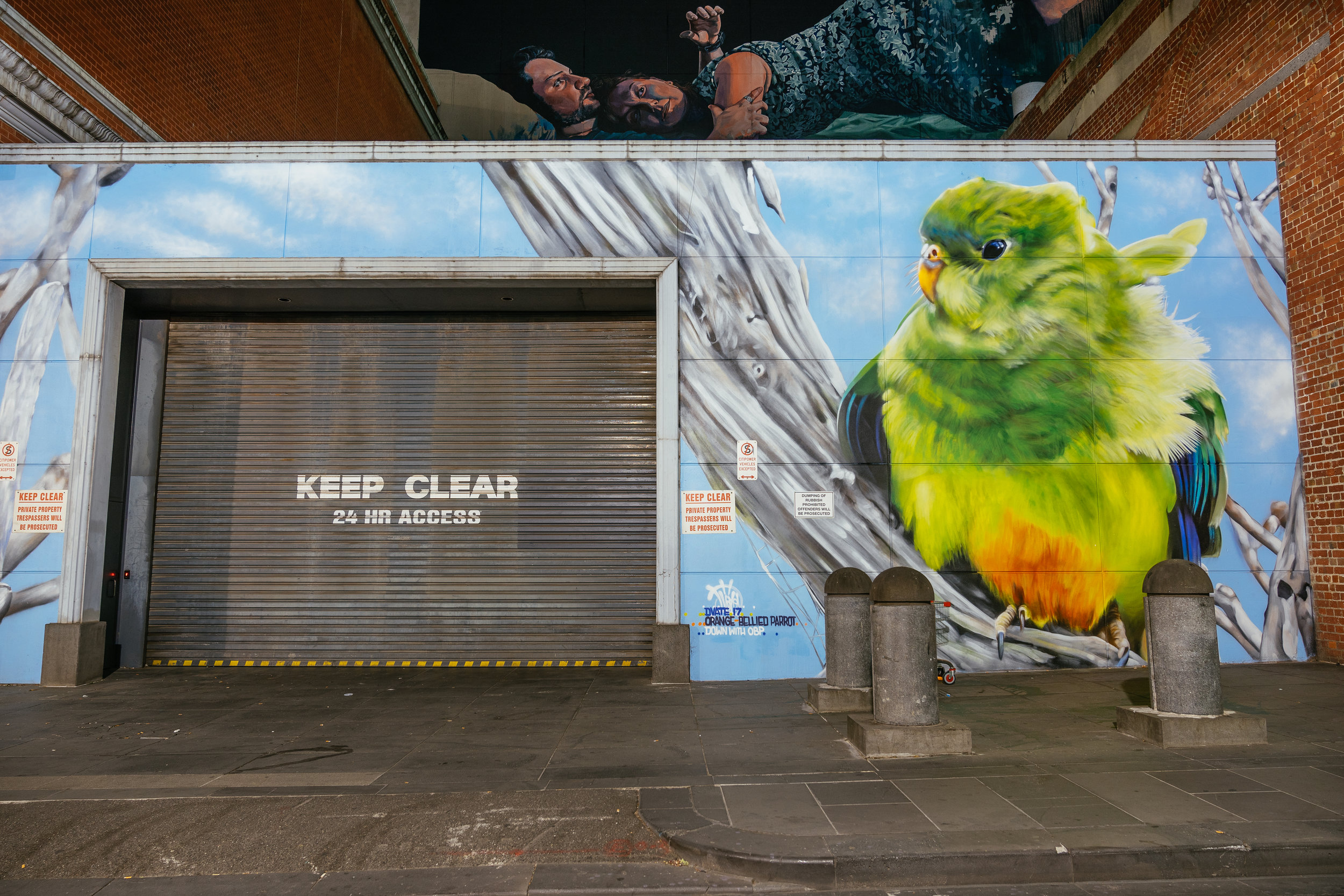 The Orange bellied parrot by Dvate. Only 30-50 birds remain in the wild. The parrots migrate across Bass strait from Victoria to Tasmania. Mural in Little Bourke St, Melbourne
