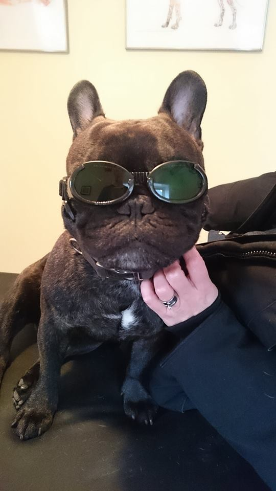 laser doggles.jpg
