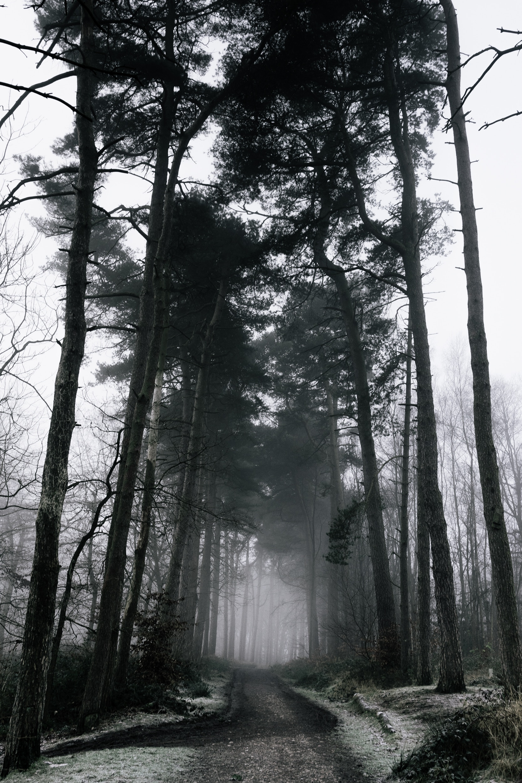 If you go down to the woods today... - - The Rural Travel Guide