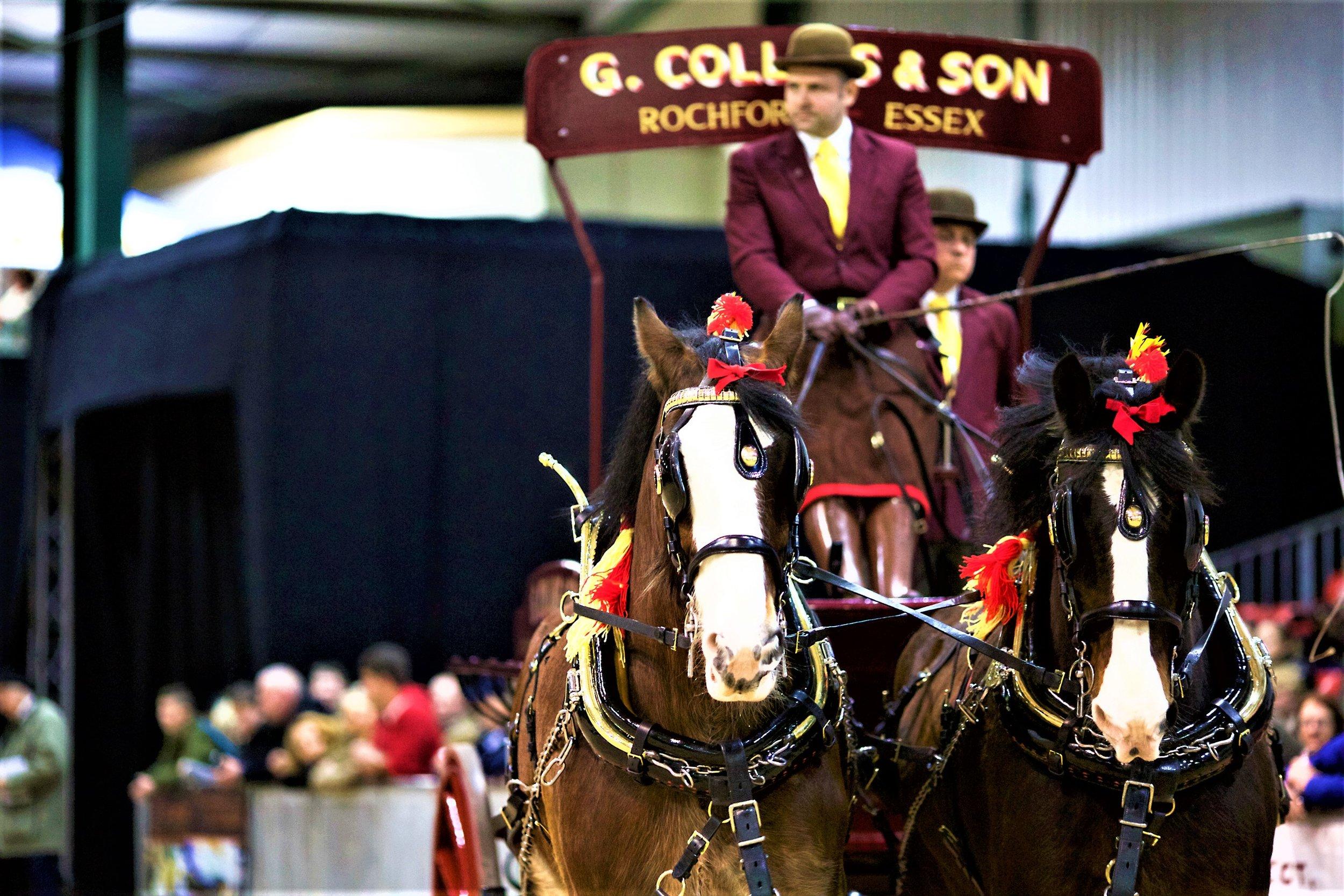 National Shire Horse Show - - Carol Stevens