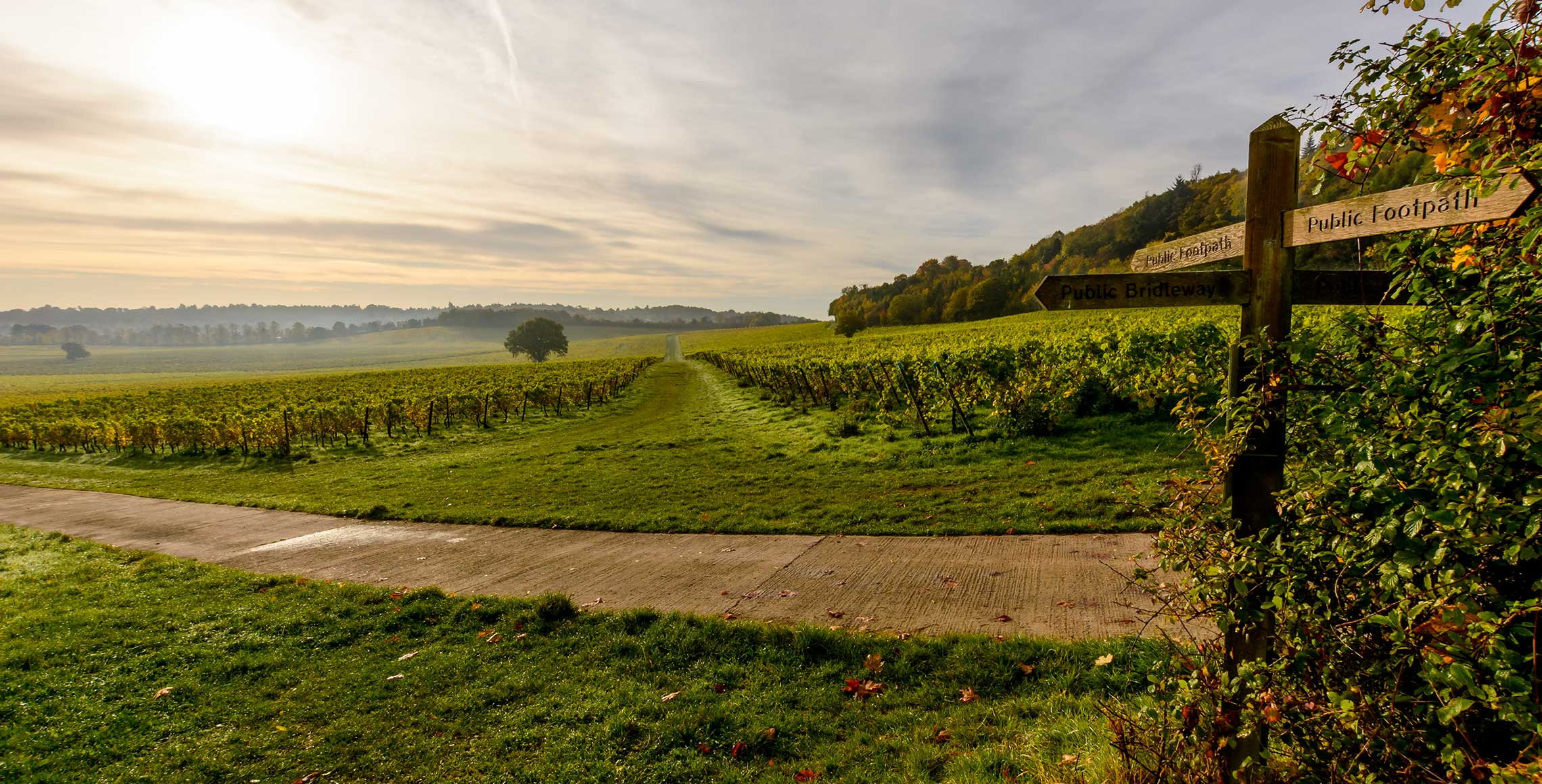 Denbies Wine Estate - - WineCellarDoor.co.uk