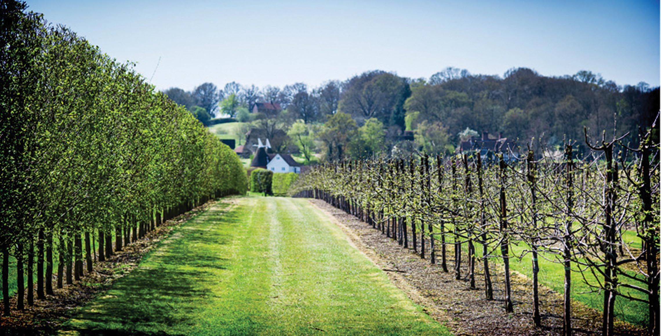 Hush Heath Estate and Winery - - WineCellarDoor.co.uk