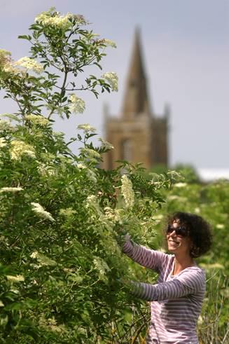 Wait just an Elderflower picking minute - - Belvoir Fruit Farms