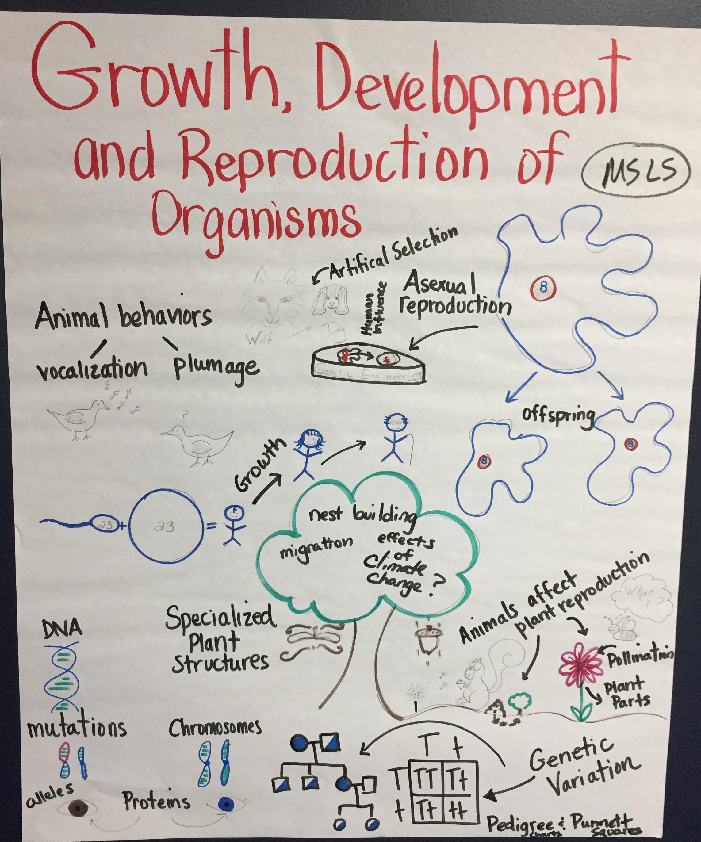 MS - Cells to Organisms s.JPG