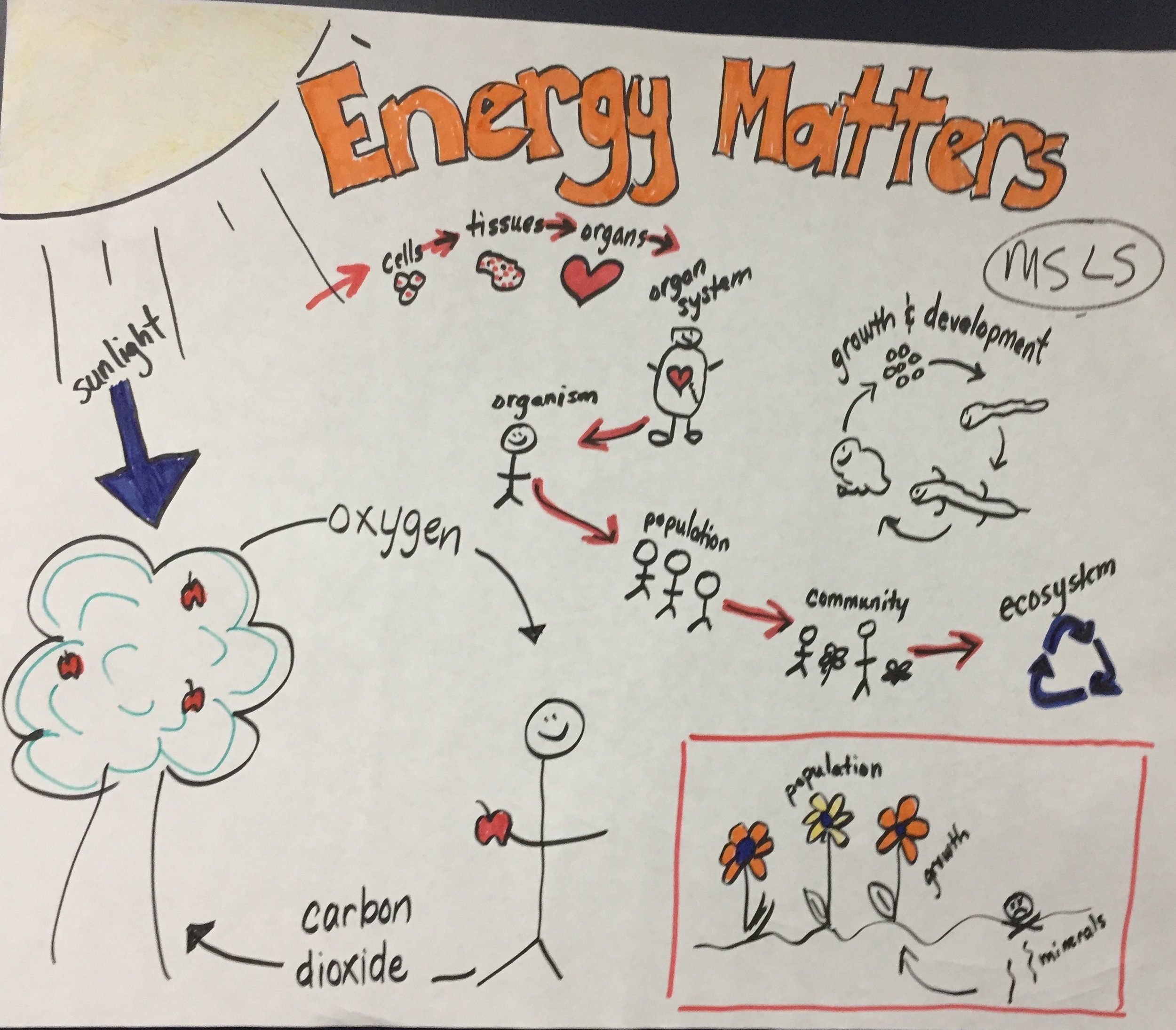 MS - Matter and Energy in Life.JPG