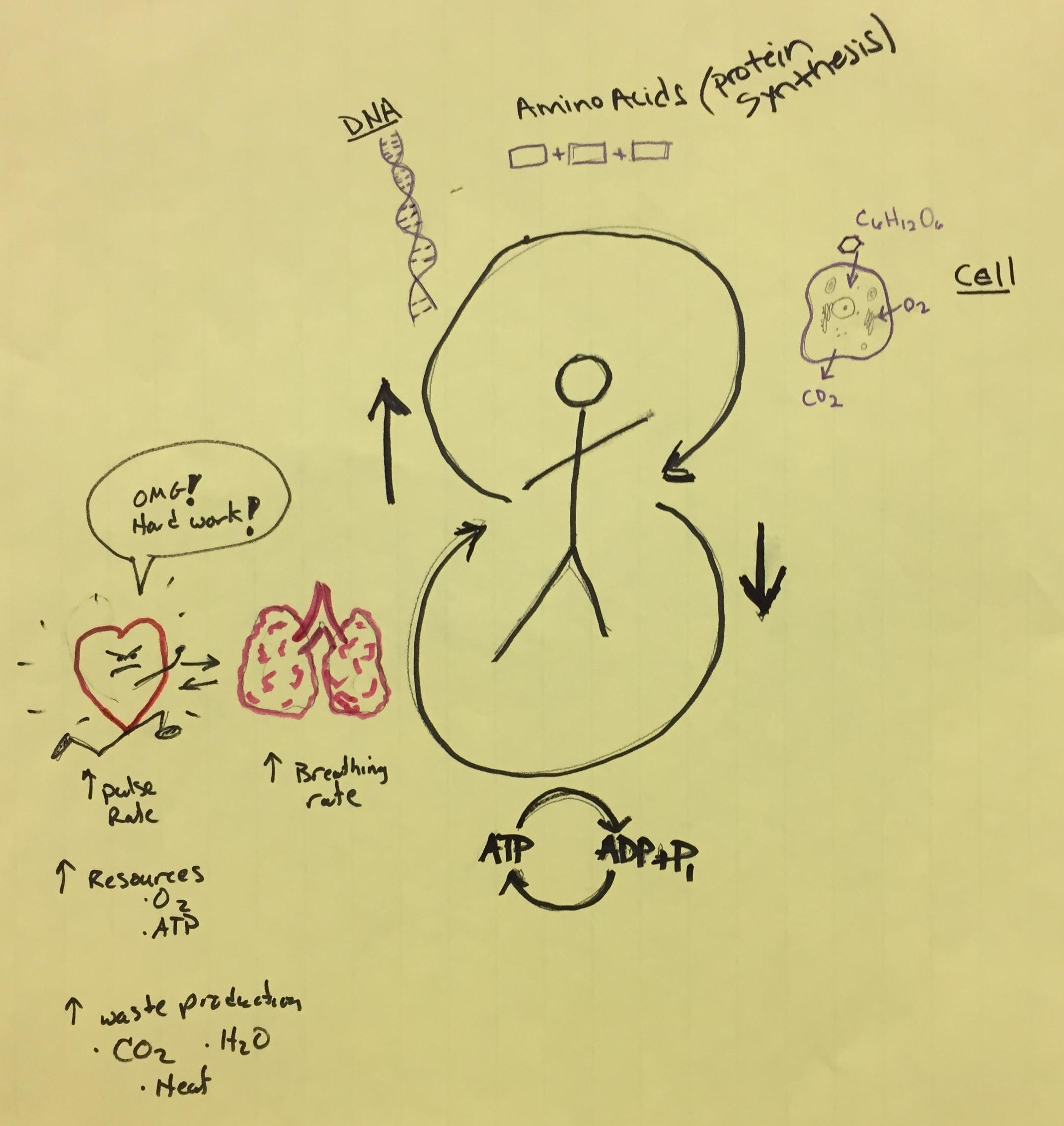 HS Molecules to Organisms.JPG