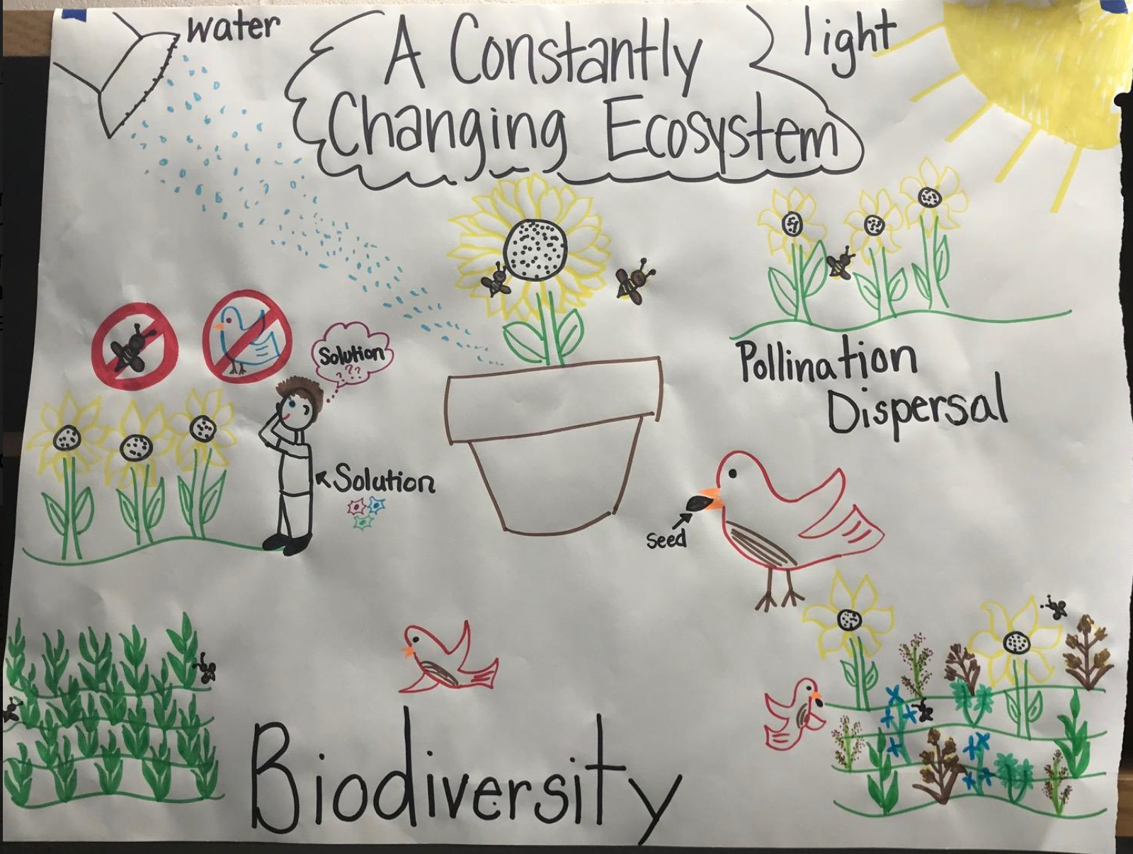2_-_Biodiversity_and_Ecocystems.png