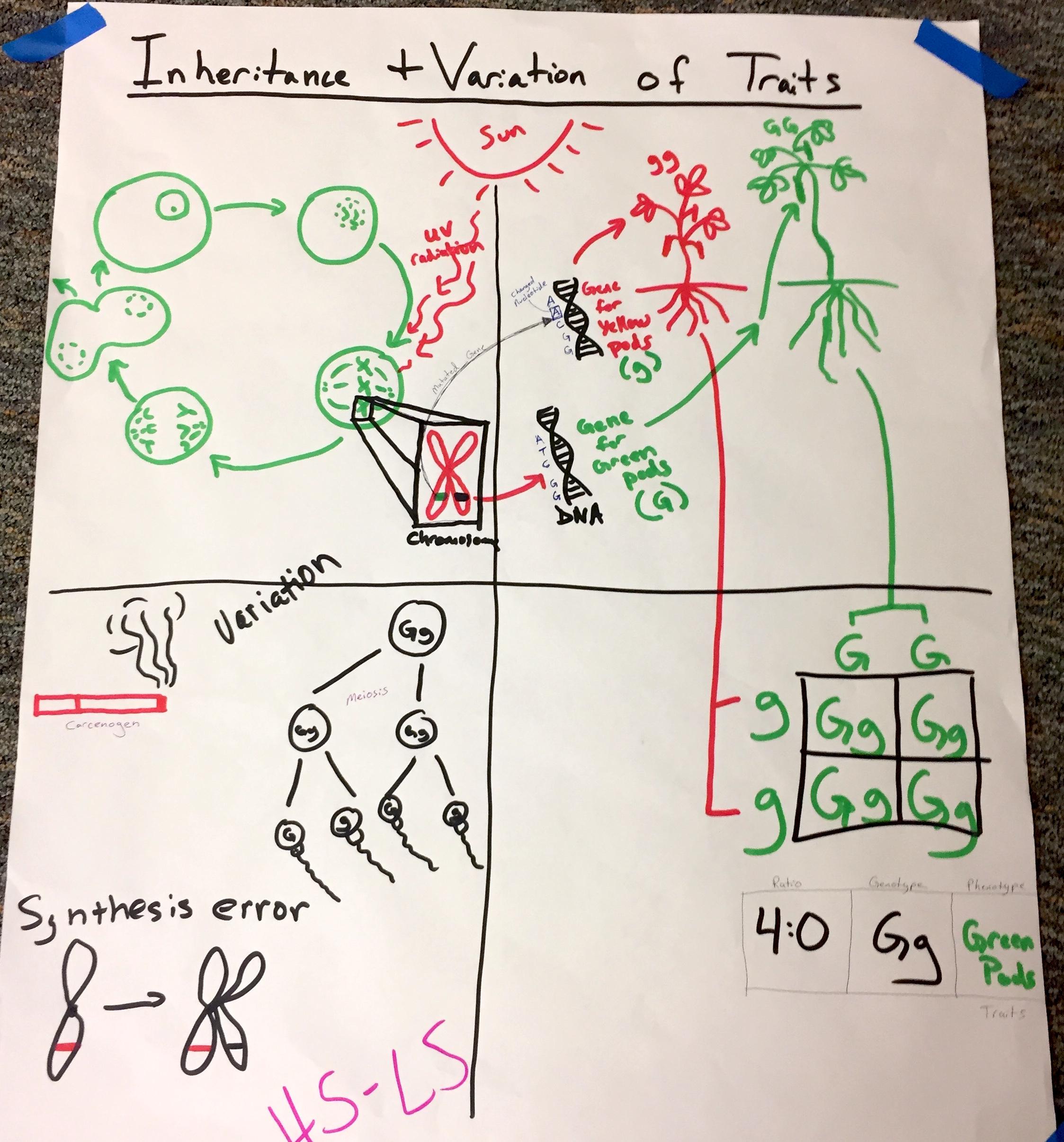 HS Inheritance and Varitation s.JPG