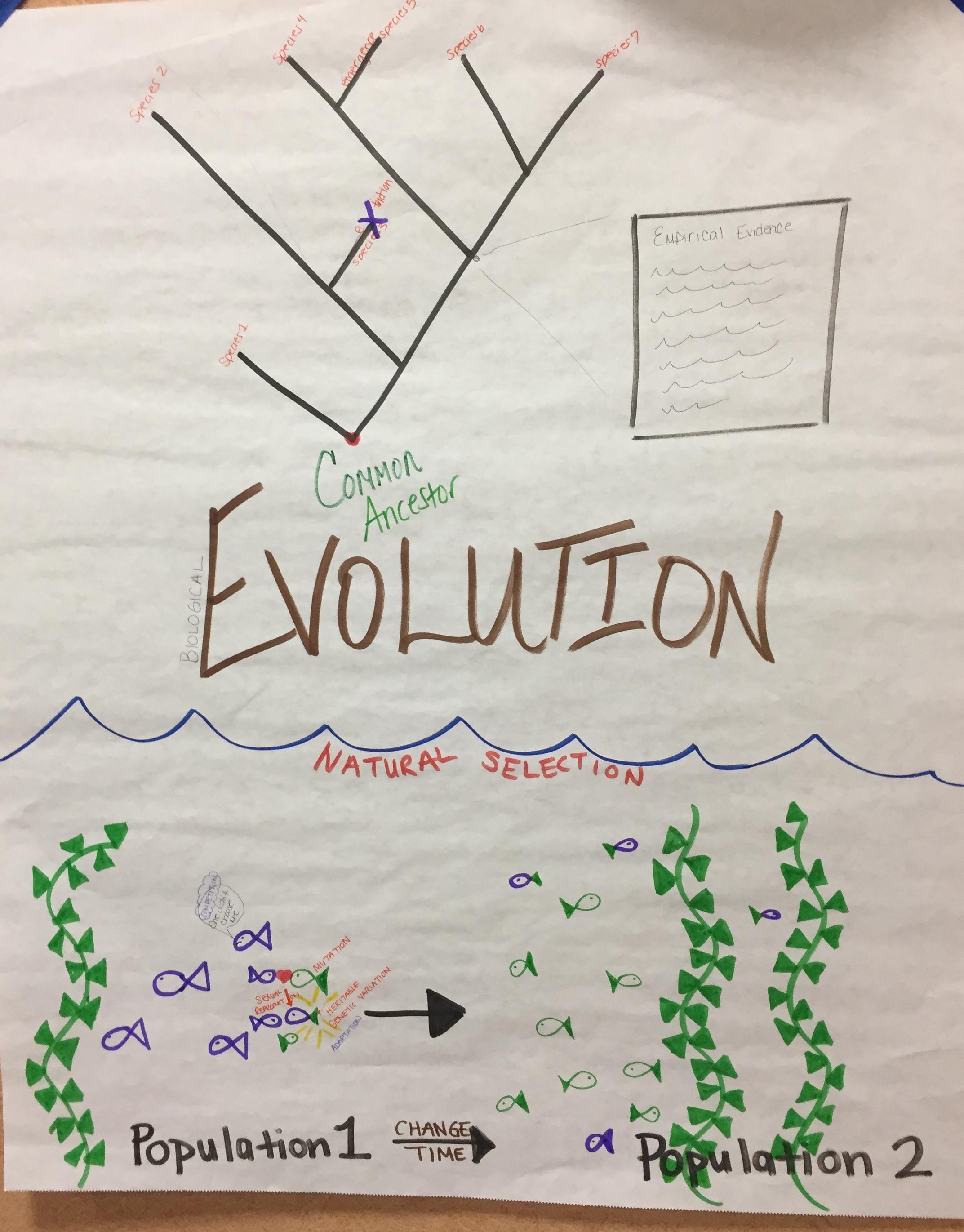 HS Natural Selectin and Evolution.JPG