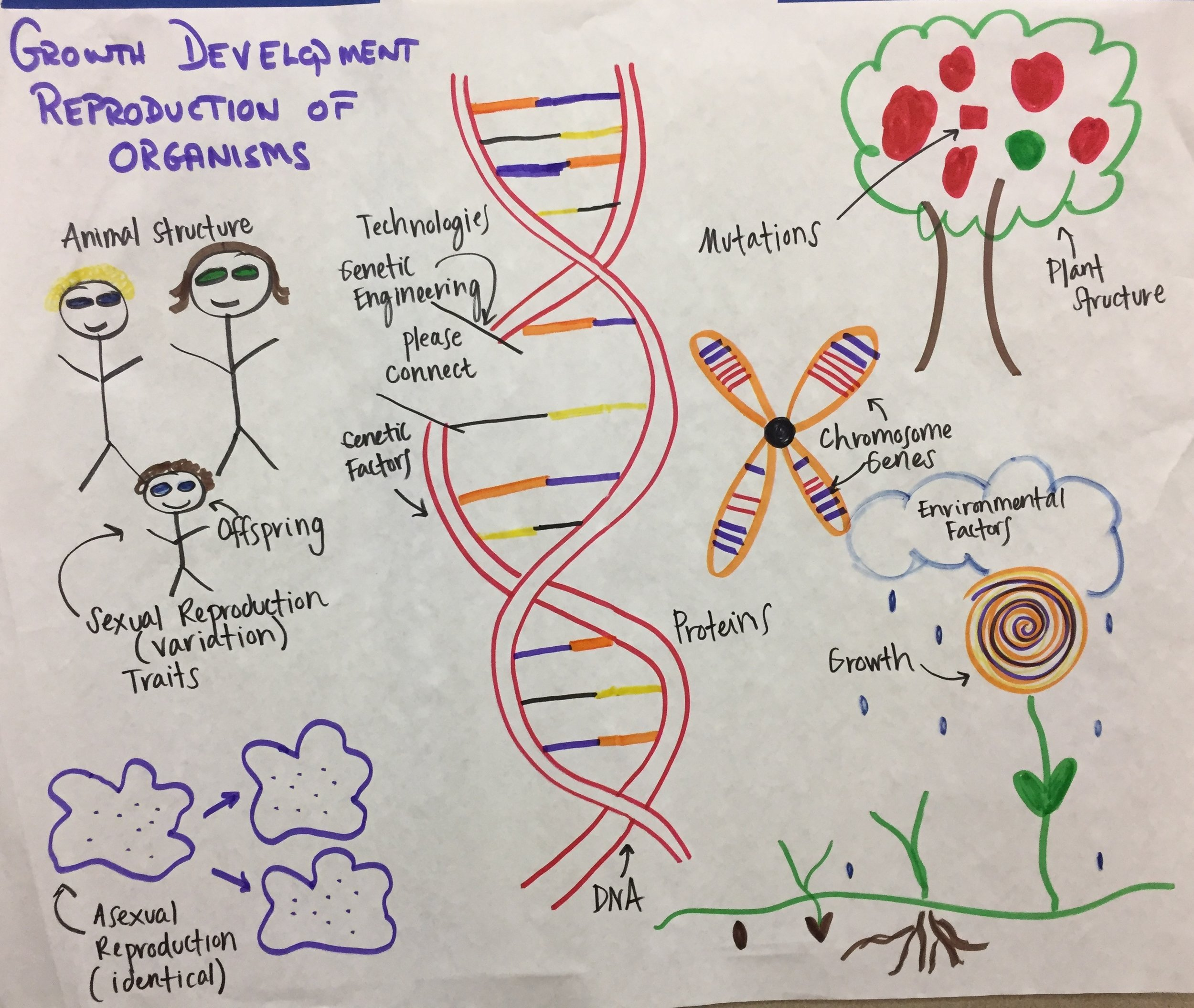 MS Growth Development of Organisms d.JPG