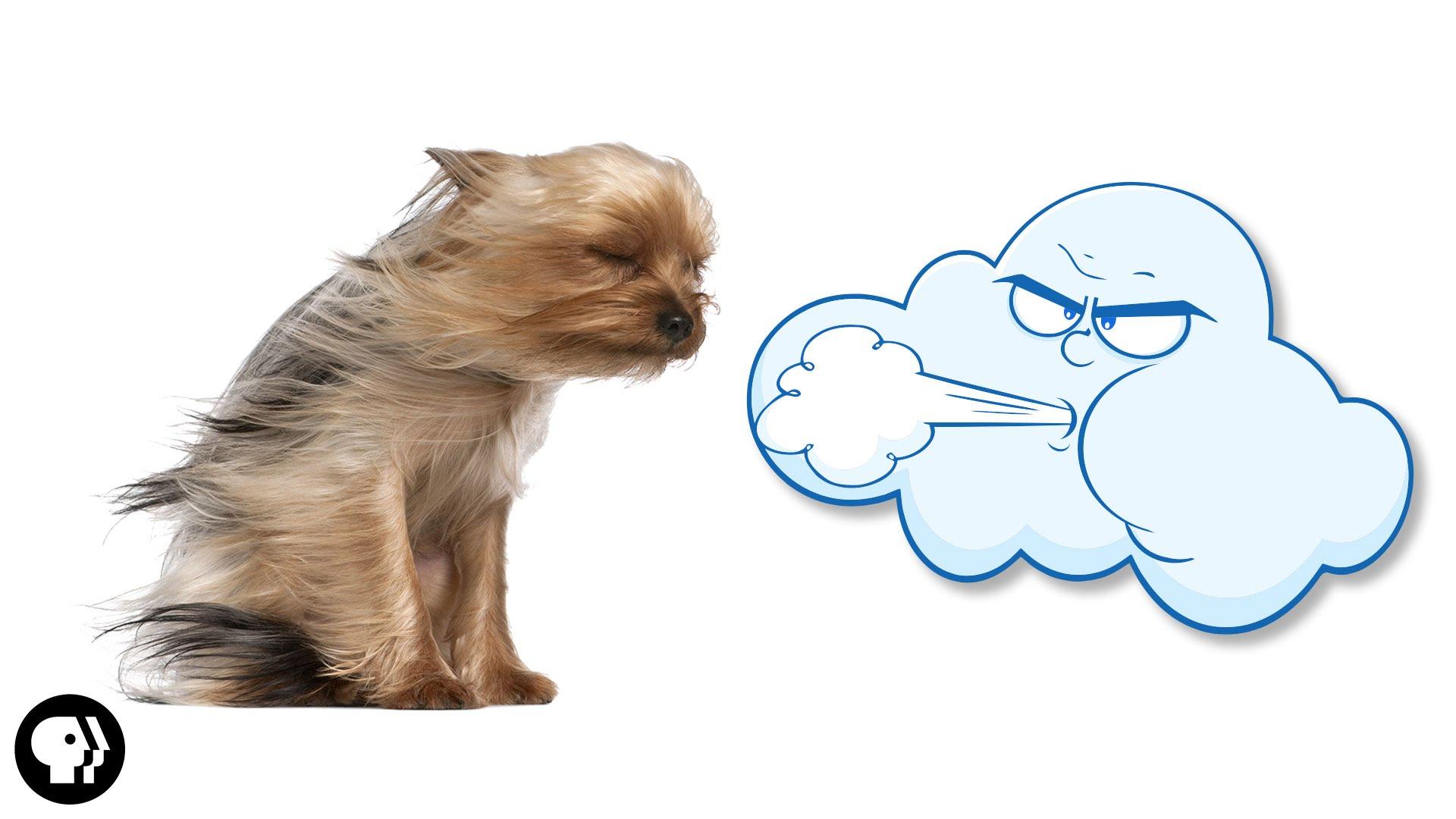 wind blow.jpg
