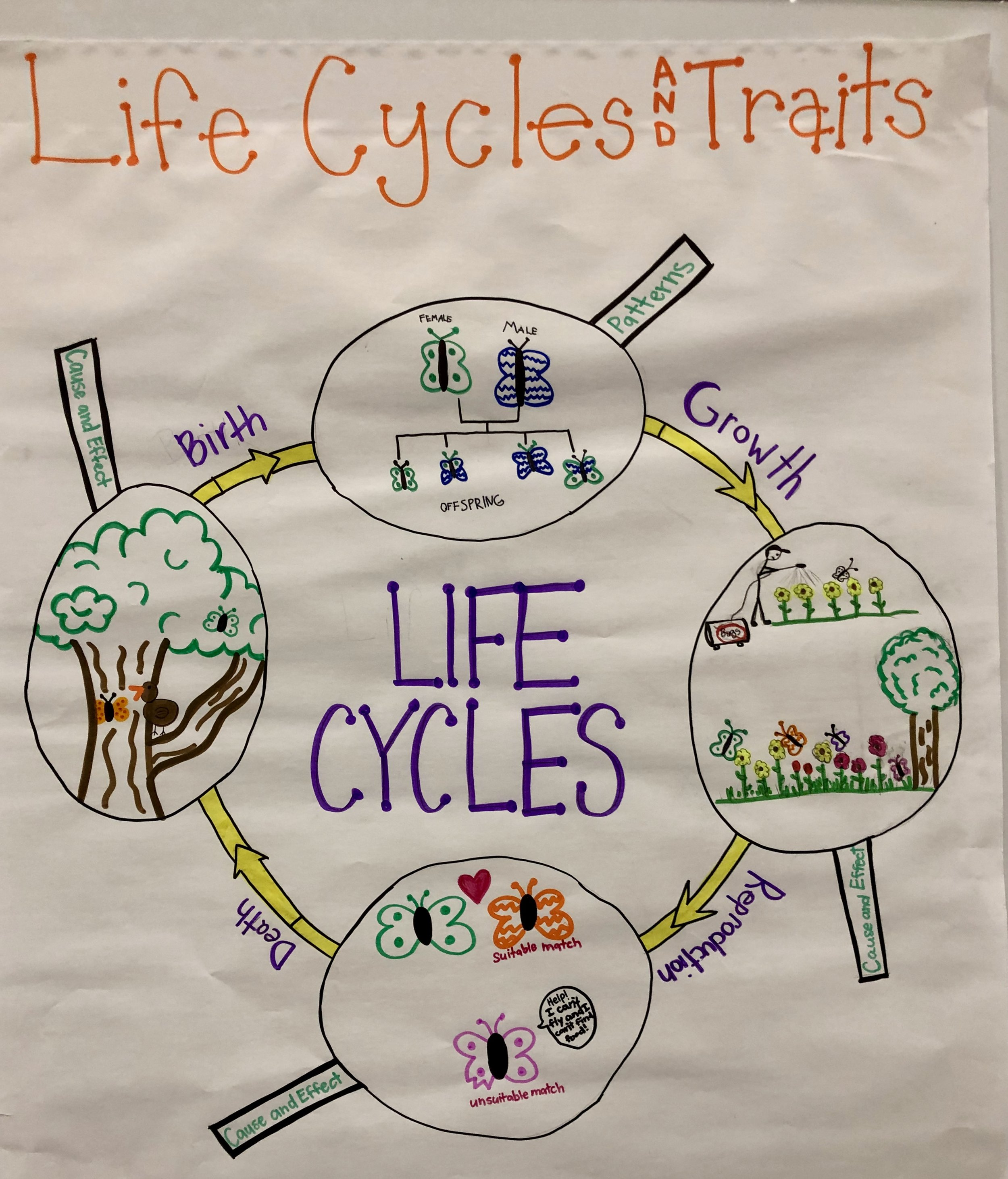 Grade 3 Life Cycle and Traits.jpg