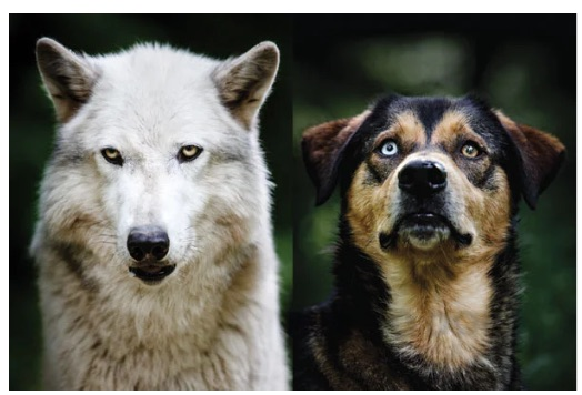 HS-LS4-4_Assessment_-_The_Evolution_of_Dogs_-_Google_Docs.jpg