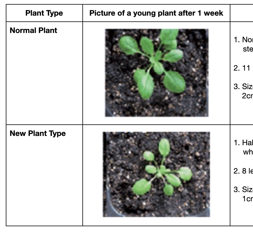 MS-LS1-6_Assessment_-_Growth_of_a_New_Type_of_Plant_-_Google_Docs.jpg