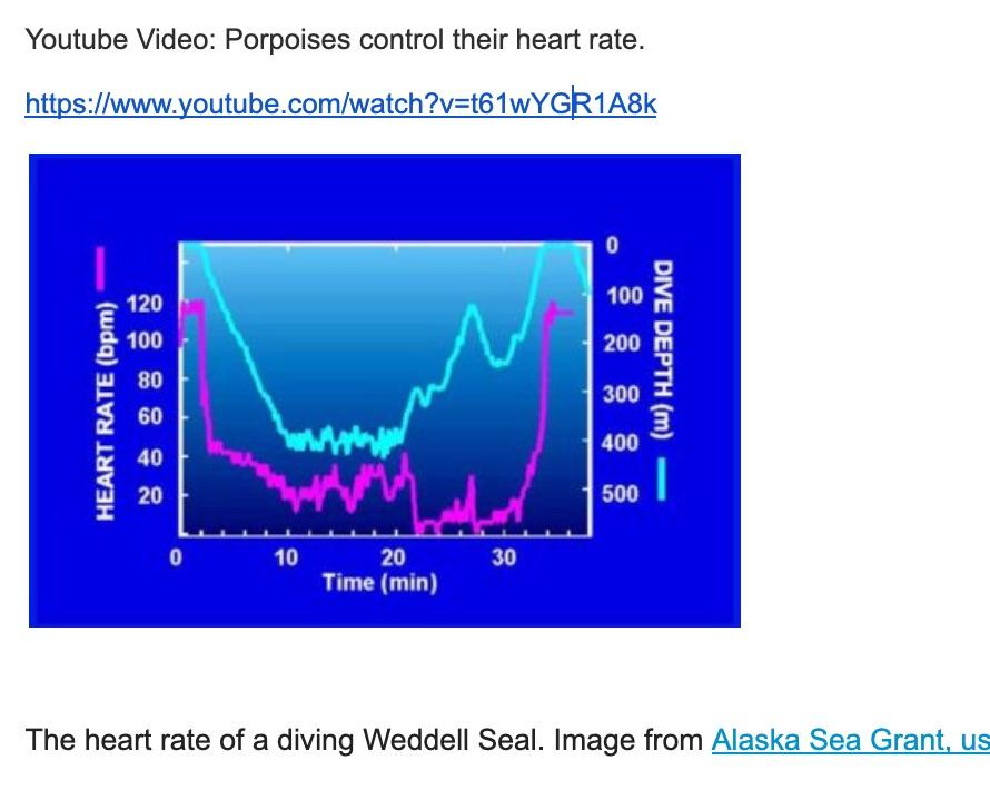 HS-LS1-3_Assessment_-_Deep_Diving_Mammals__NY__-_Google_Docs.jpg