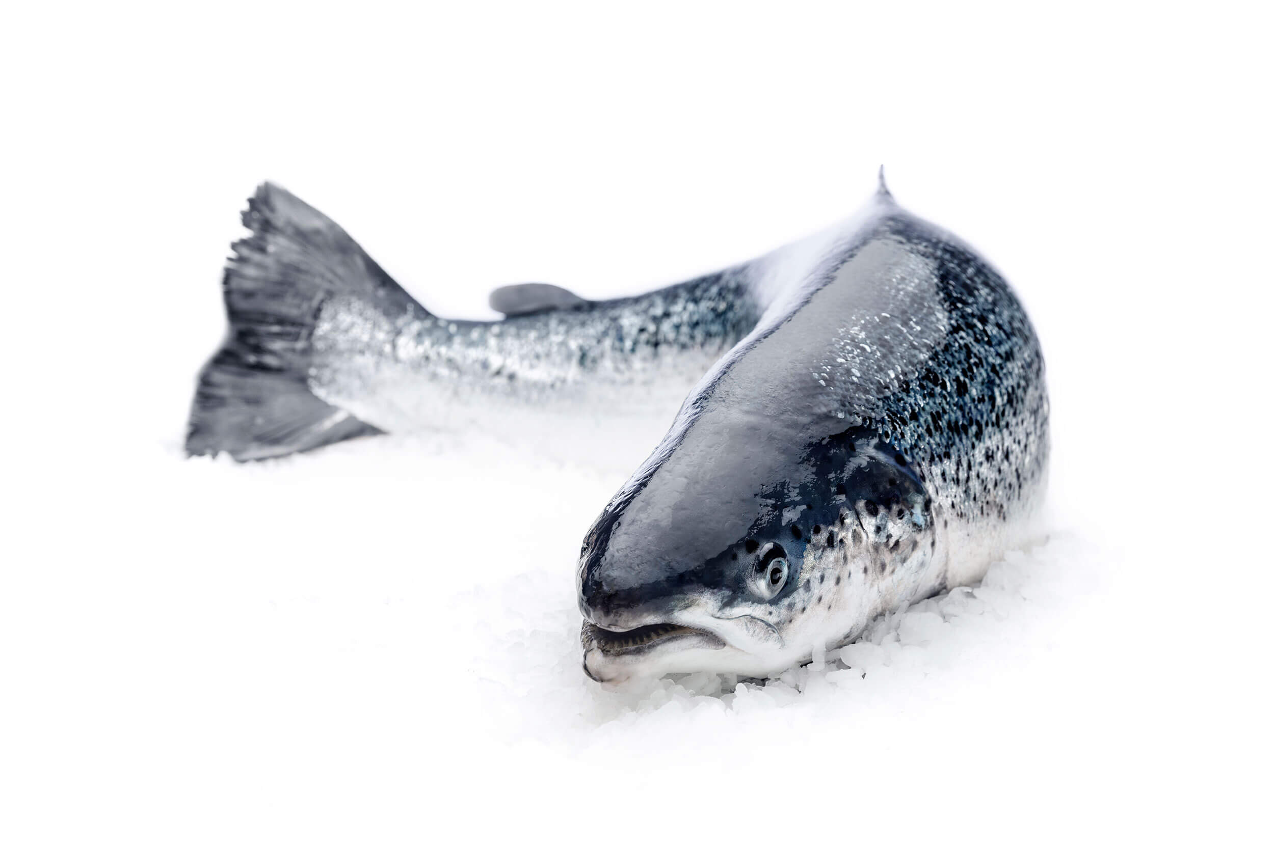 rinka-salmon-whole.jpg