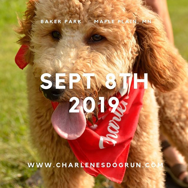 "Join us with Dr. Uzma Samadani and the Neurotrauma Research Lab for the 3rd annual Charlene's 5k Dog. This year's theme is ""spine is time."" 100% of proceeds support the Neurotrauma Research Lab at the U of M. Register online, link in profile. We look forward to seeing you and your dogs on Sept 8th for this paw friendly event. #charlenesdogrun #pawsforacause #dogsofmsp #twincitiesrunner #braininjuryresearch #spineresearch #universityofminnesota"