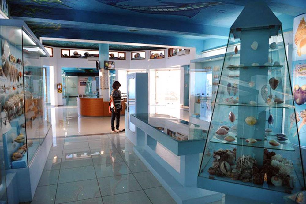 """INDIA SEASHELL MUSEUM   Auf einer Fläche von 4000 Quadratmetern erstreckt sich dieses Museum mit über 40.000 Muschelarten, Darunter die """"Breath Maria"""", eine von weltweit vier Exemplaren."""