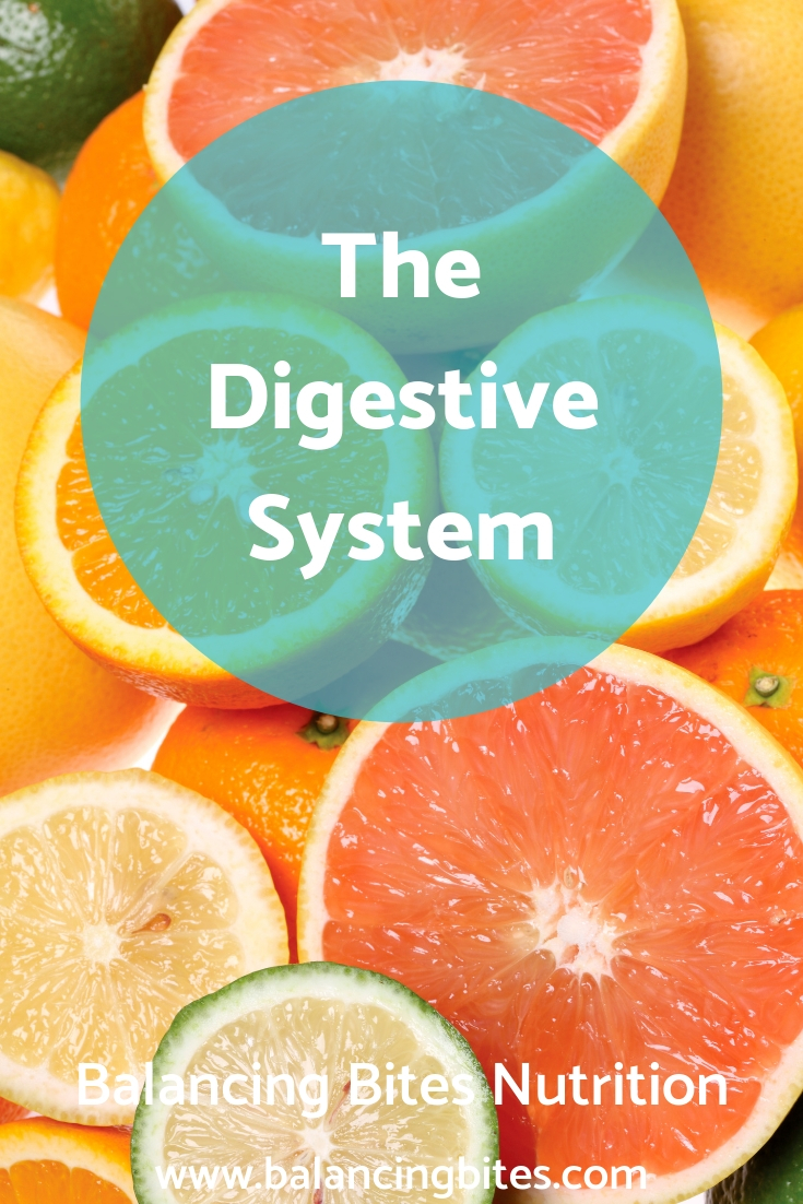 The Digestive System-Balancing Bites Nutrition.jpg