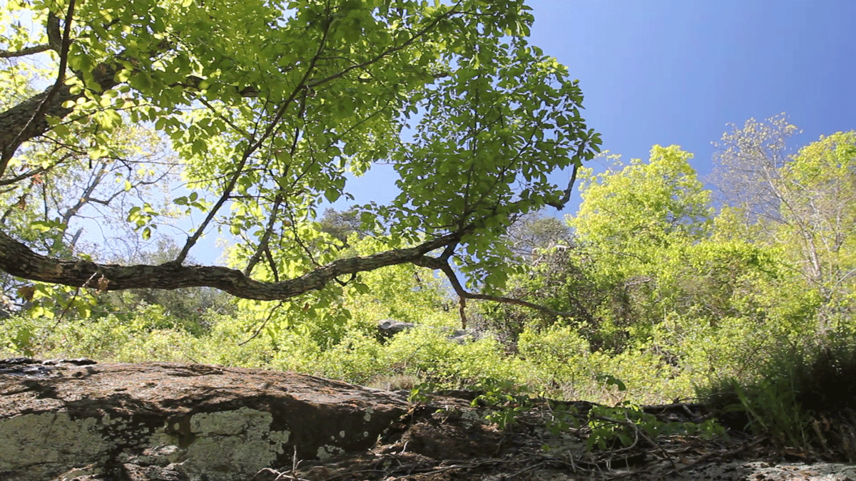 Rockey-Face-outcrop,-chestnut-oak,-pan-left-to-right.png
